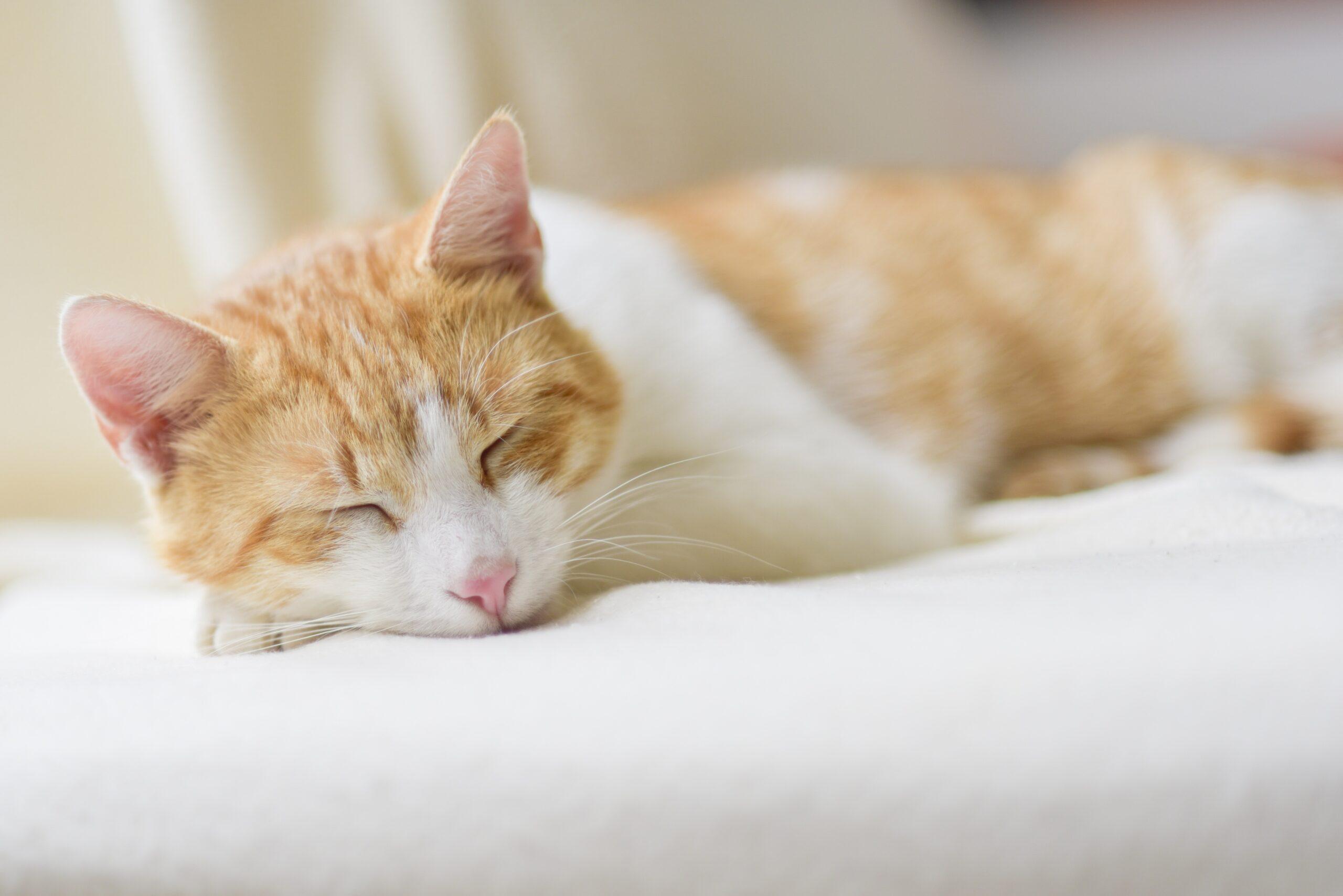 meditasyon, rahatlama, uyku